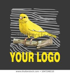Concept with canary on stick by watercolor and ink with text on dark grey background. Dark Grey Background, Watercolor And Ink, Concept, Bird, Illustration, Animals, Vectors, Animales, Animaux