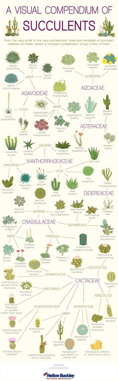 1000 ideas about succulent rock garden on pinterest for 1000 designs for the garden and where to find them