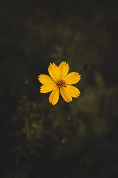 Yellow cosmos flower close-up photography · free stock photo Wallpaper Sky, Aesthetic Iphone Wallpaper, Mobile Wallpaper, Aesthetic Wallpapers, Yellow Flower Wallpaper, Yellow Flowers, Cute Home Screen Wallpaper, Sunshine Wallpaper, Wallpaper Maker