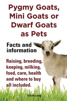 Goats as Pets. Pygmy Goats, Mini Goats or Dwarf Goats: Facts and Inform Pygmy Goats as Pets. Pygmy Goats, Mini Goats or Dwarf Goats: Facts and Inform.Pygmy Goats as Pets. Pygmy Goats, Mini Goats or Dwarf Goats: Facts and Inform. Mini Goats, Baby Goats, Baby Pygmy Goats, Pigmy Goats, Goat Pen, Goat Care, Nigerian Dwarf Goats, Raising Goats, Keeping Goats