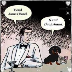 Hund is even more savy than Bond! Dachshund Art, Funny Dachshund, Dachshund Puppies, Weenie Dogs, Funny Dogs, Daschund, Doggies, I Love Dogs, Puppy Love