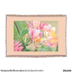Honeysuckle flower photo