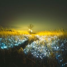 Tall Grass and Streams, Bare Feet and Fireflies