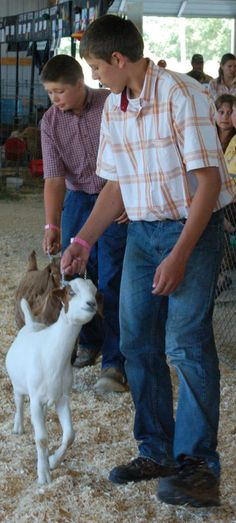 Joseph Brebeck, front, and Joshua Westenberg show their goats on Saturday morning. #DCFair