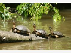 Tortuguero National Park #costarica