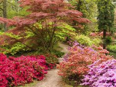 create a woodland garden by planting layers of vegetation in the same way it grows in the wild. Trees are the tallest specimens. Underneath grows the understory level of smaller trees and shrubs. This article provides understory planting tips. Garden Shrubs, Landscaping Plants, Shade Garden, Garden Plants, Planting Plants, Fruit Garden, Modern Landscaping, House Plants, Garden Types