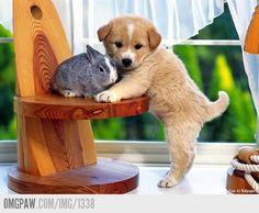 kleine puppy met kleine konijntje