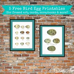 1920's Bird Eggs Printables for Framing, Cards, Scrapbooking, and more from Knick Of Time @ knickoftime.net