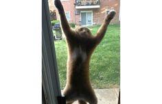 FAIL: 33 Hilarious Photos Of Cats Who Made Horrible Life Choices (Slide #40) - Pawsome