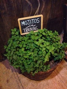 LOL Mojitos in training