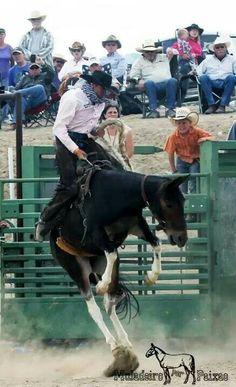 Bronc Mule Riding