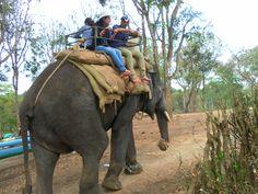 Dubare elephant camp, Madikeri