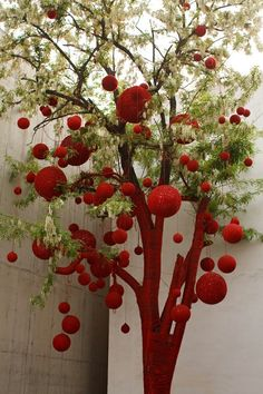 Robinia tree decorated with red crochet balls.