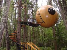 Treehouses that can be rented as hotel rooms dot Vancouver Island's old growth forests.