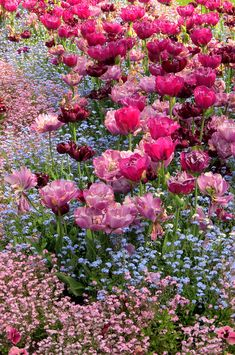 ✯ Tulips And Forget- Beautiful gorgeous pretty flowers Tulips Garden, Garden Plants, Planting Flowers, Garden Cottage, Meadow Garden, Lush Garden, My Secret Garden, Dream Garden, Garden Inspiration