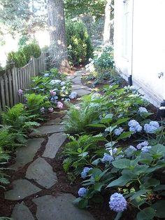 Hydrangea natural stone pathway