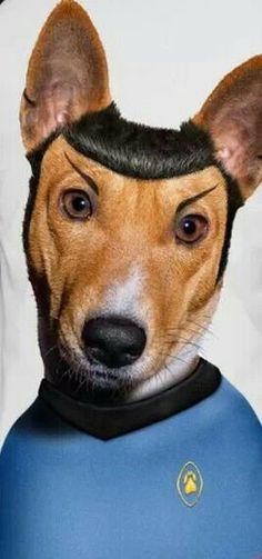 Spock dog<<<Imagine this without the eyebrows for a minute.  You're welcome.