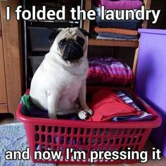 Funny Animal Memes Of The Day 32 PicsYou can find Funny pugs and more on our website.Funny Animal Memes Of The Day 32 Pics Pug Pictures, Funny Animal Photos, Funny Animal Memes, Dog Memes, Cute Funny Animals, Funny Dogs, Hilarious Pictures, Animal Quotes, Funny Memes