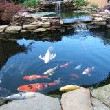 9 Awesome Diy Koi Pond And Waterfall Ideas For Your Back Yard.loved keeping koi, gotta get a pond going again, such great pets Fish Ponds Backyard, Outdoor Ponds, Koi Ponds, Koi Pond Design, Landscape Design, Landscape Mode, Photos Des Stars, Goldfish Pond, Pond Waterfall