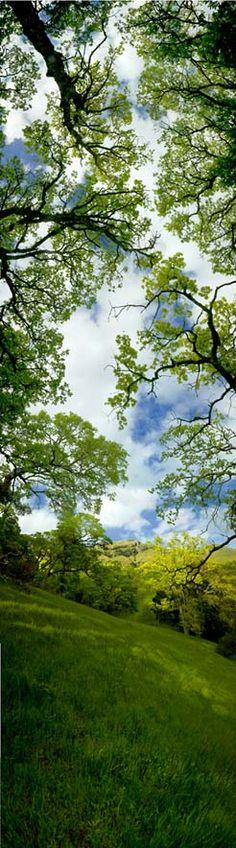 New Vertoramas - McGuire Peak with Oaken Sky by Cooksey-Talbott