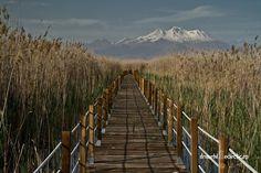 Drumețul eclectic – Invitat special Turca La Un Ceai | Turca La Un Ceai Mount Rainier, Vineyard, Mountains, Nature, Travel, Outdoor, Outdoors, Naturaleza, Viajes