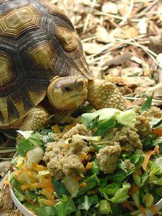 World's rarest tortoise arrives in the U.S.