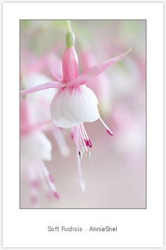 """Soft Fuchsia"" by AnnieSnel   Redbubble"