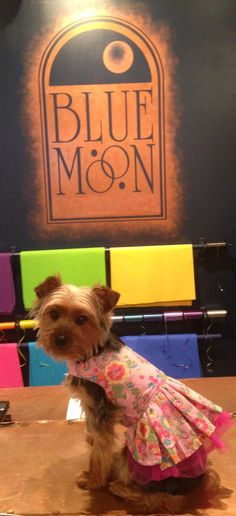 Foxy Roxy visiting her store in Blue Moon.