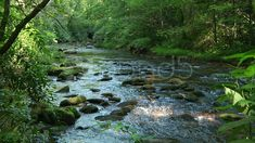 Mountain Stream 12 - Stock Footage | by mark29 $20
