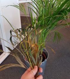 Grønne planter tåler ikke kulda i vinternorge! Planters, Planter Boxes, Plant, Flower Pots, Pots