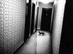 From '71-NY by Daïdo Moriyama  Via The Cat Ladies  Also