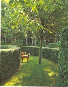 Hornbeam hedge,   by Jacques Wirtz