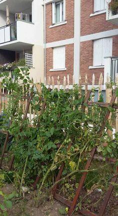 Arcueil Ville Comestible - Jardin Partagé des Rêves - Chaperon Vert - https://www.facebook.com/arcueilvillecomestible/