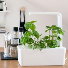 How To Grow A Year Round Hydroponic Garden
