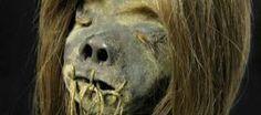 The shrunken heads of Jivaro