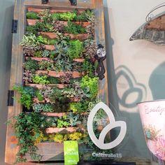 #succulent #wall #art #retailer #award Vertical Planter, Succulent Wall, Living Walls, Horticulture, Terrarium, Succulents, Planters, Dreams, Wall Art