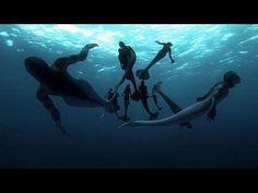 Sirenas ¿Realidad o Mito? - Discovery Max - YouTube