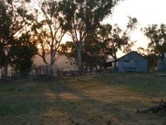 Light over old shearing shed reference photo