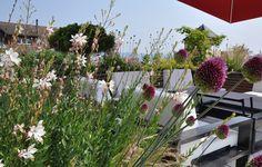 Terrace Richterswil | Trüb for Green AG Horticulture | Horgen Zürich train Horticulture, Terrace, Plants, Home, Garden Planning, Backyard Patio, Balcony, Patio, Ad Home