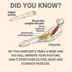 """Yoga Daily Progress on Instagram: """"Follow @yogadailycommunity ✨ And Drop a ❤️ if this is helpful! . . #yogabreath #yogalesson #practiceeverydamnday #yogaglo #yogaforever…"""" Gluteal Muscles, Daily Progress, Bone Diseases, Stomach Muscles, Yoga Lessons, How To Start Yoga, Iyengar Yoga, Yoga Tips, Yoga Everyday"""