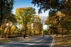 Morning Movement, Central Park