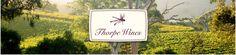 McLaren Vale - Thorpe wines