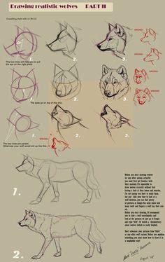 Media Como dibujar lobos - Alter Dz