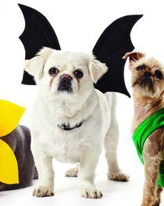 DIY Pet Costume: Bat-Wing Dog Harness