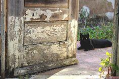 Door and cat in Coimbra-Portugal (Photo © Doors Portugal)