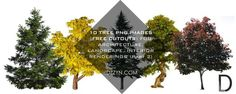 10 TREE PNG IMAGES (FREE CUTOUTS) FOR ARCHITECTURE, LANDSCAPE, INTERIOR RENDERINGS (Part 2) | Dzzyn