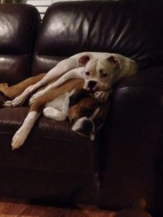Lazy boxers