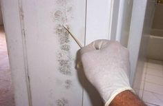 Hire mold inspectors and testers from this enterprise if you need professionals who also provide their clients with the precise steps needed to address their problems. They offer unbiased services.