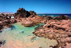 Aquarium Sharks, Kelp Forest, Cool Rocks, Garden Oasis, Tide Pools, Waterworks, Salt And Water, Laguna Beach, Beach House Decor