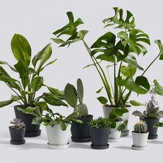 Hayn Flowerpot-ruukut tarjoavat kukille ja viherkasveille miellyttävän minimalistisen kodin. Pelkistetyt ruukut aluslautasineen on valmistettu erityisestä polystone-materiaalista, jossa yhdistyvät muovin keveys ja betonin huokoinen olemus.